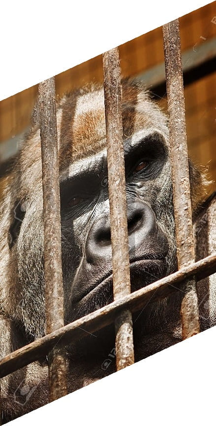 Gorilla Glue After The World News
